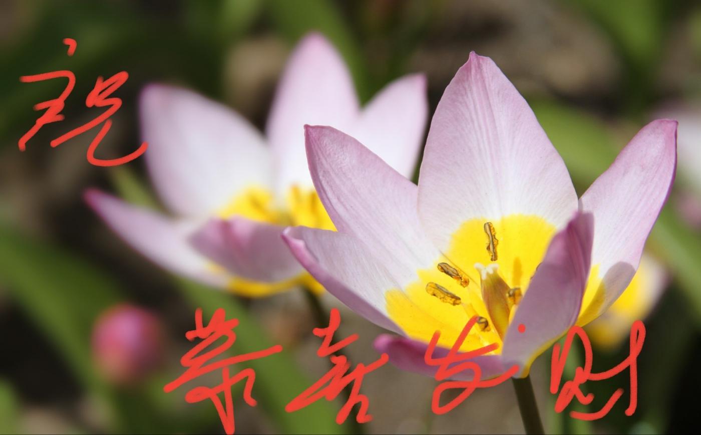 [田螺摄影]把祝福写进花开里 新年好!_图1-11
