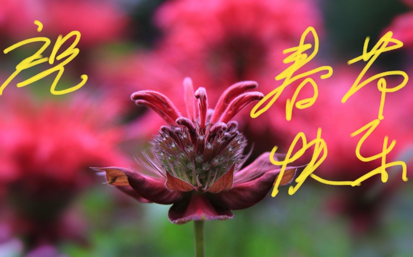 [田螺摄影]把祝福写进花开里 新年好!_图1-12