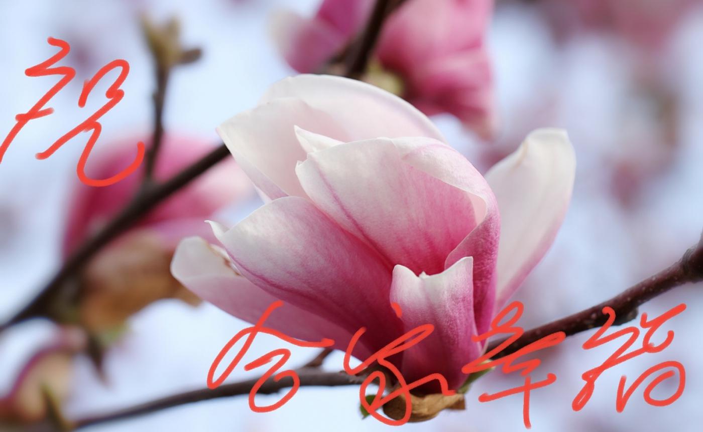 [田螺摄影]把祝福写进花开里 新年好!_图1-14