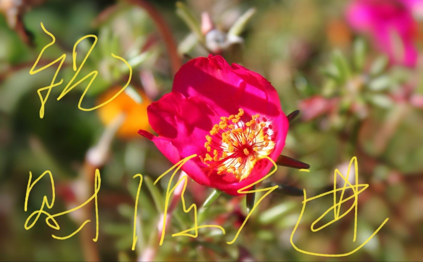 [田螺摄影]把祝福写进花开里 新年好!_图1-13