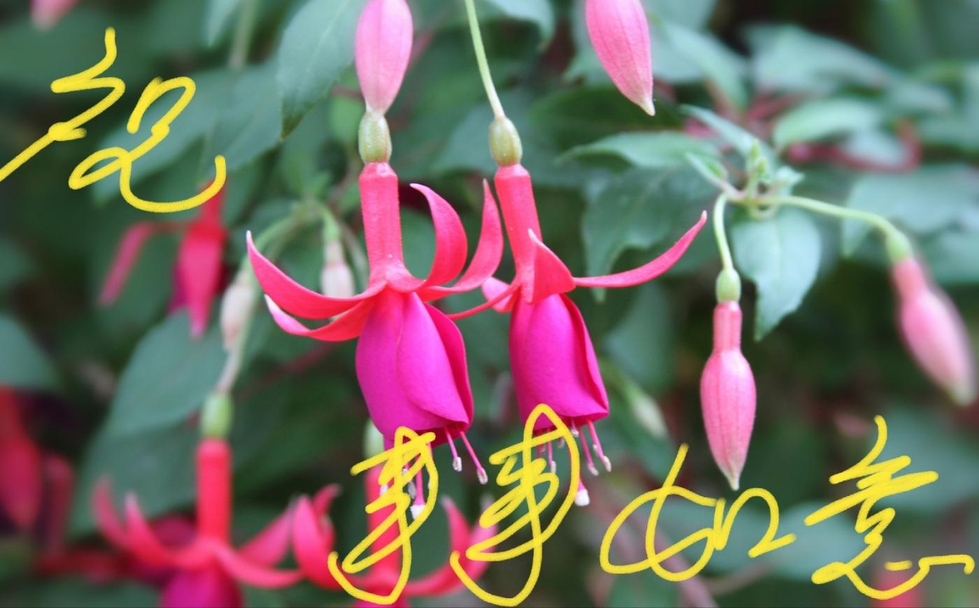 [田螺摄影]把祝福写进花开里 新年好!_图1-15