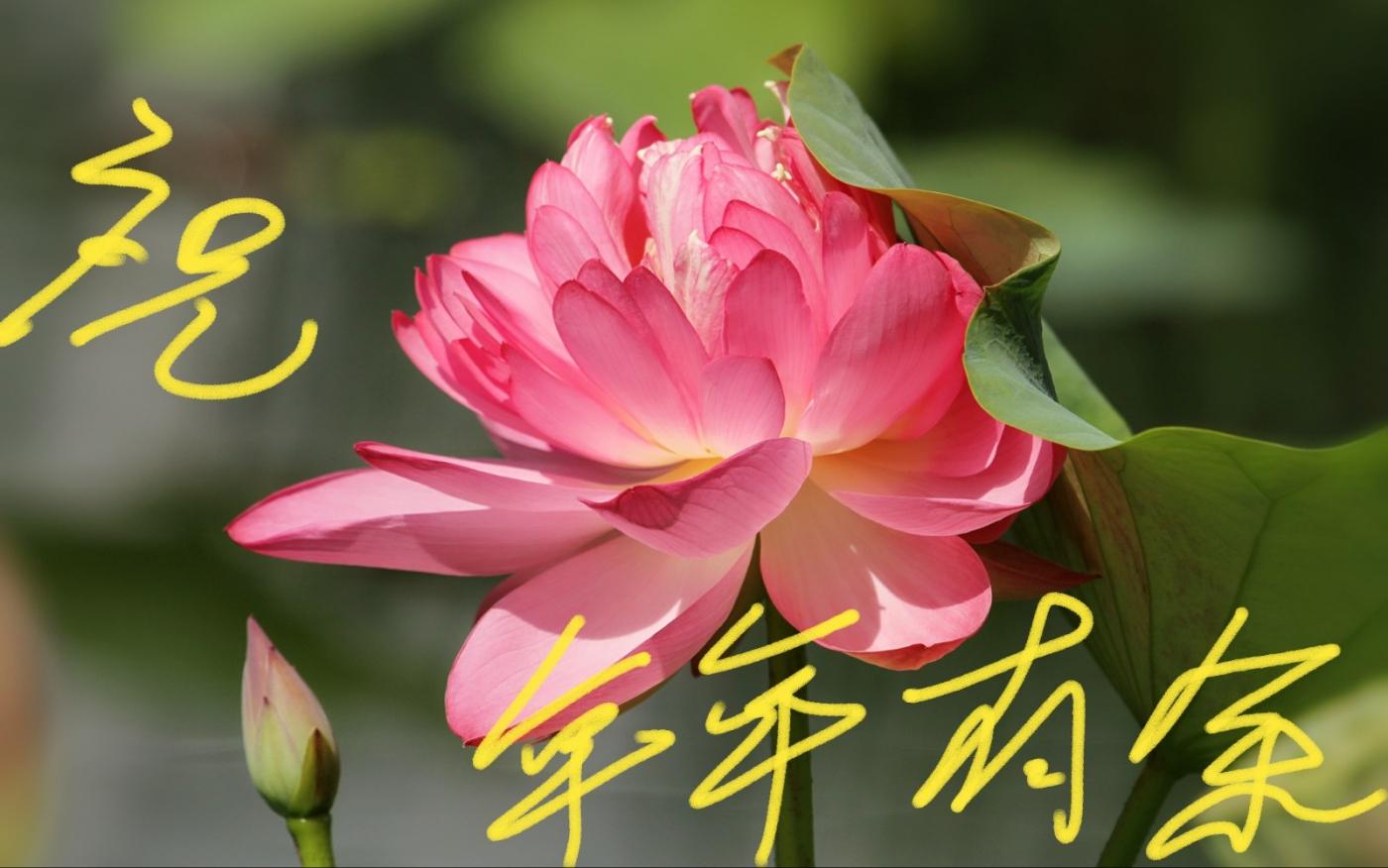 [田螺摄影]把祝福写进花开里 新年好!_图1-16