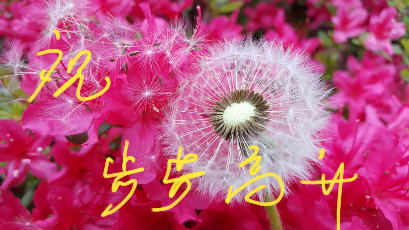 [田螺摄影]把祝福写进花开里 新年好!_图1-18