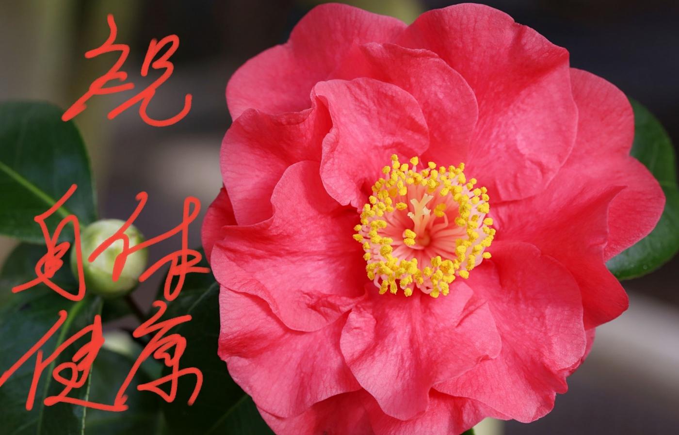 [田螺摄影]把祝福写进花开里 新年好!_图1-22