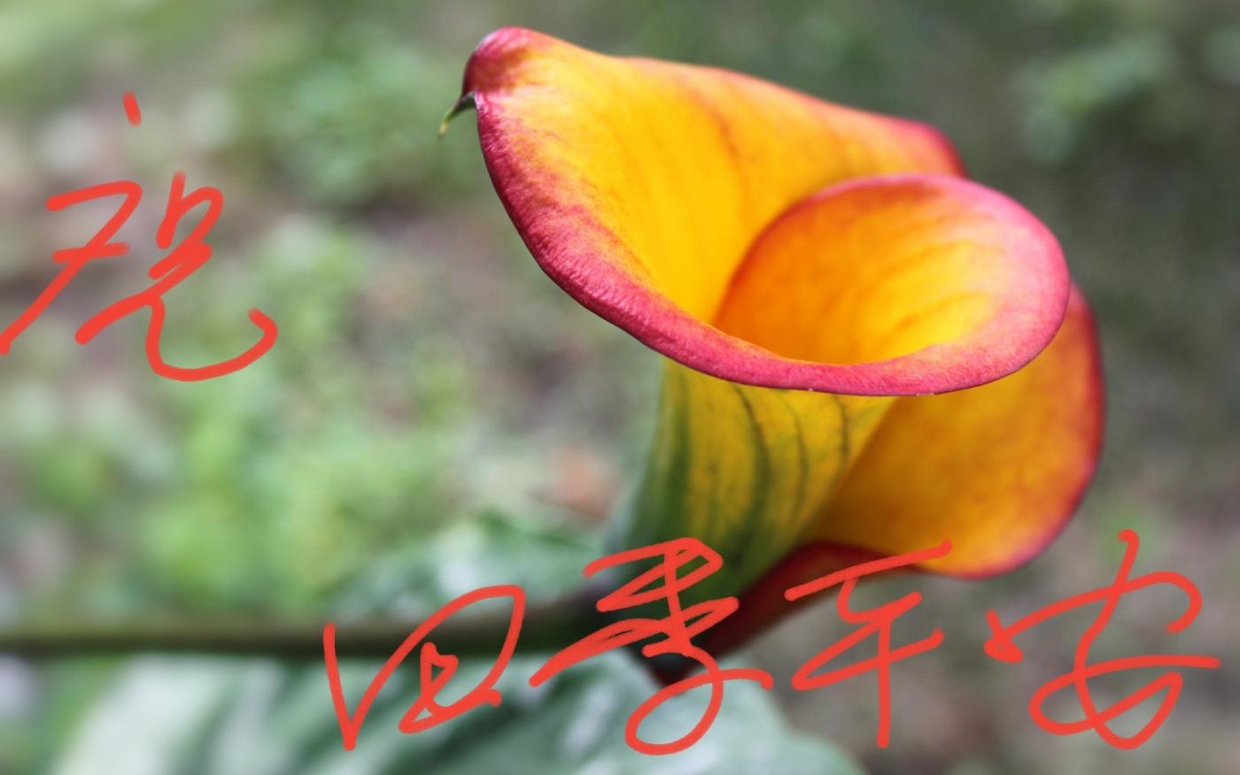 〔田螺攝影〕把祝福寫進花開里 新年好!_圖1-20