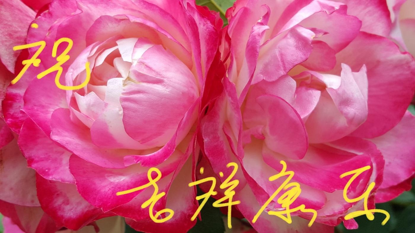 [田螺摄影]把祝福写进花开里 新年好!_图1-26