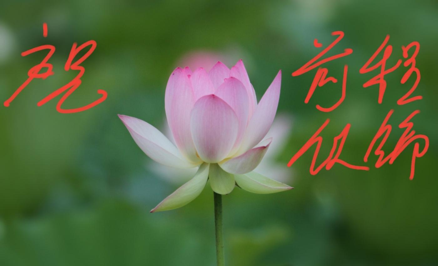 [田螺摄影]把祝福写进花开里 新年好!_图1-27