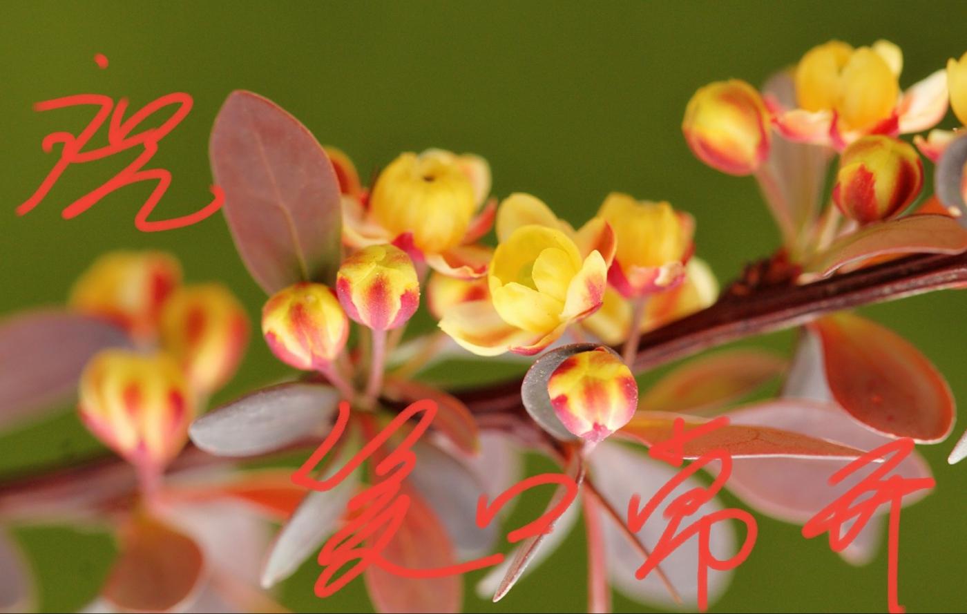 〔田螺攝影〕把祝福寫進花開里 新年好!_圖1-28