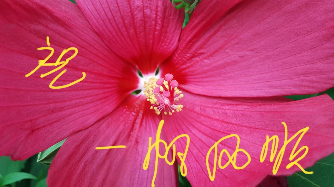 〔田螺攝影〕把祝福寫進花開里 新年好!_圖1-29