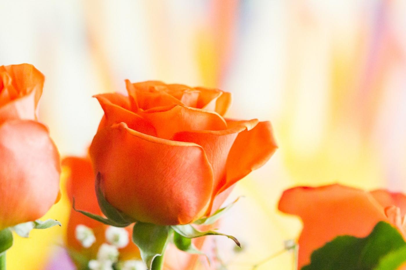 情人节你送花了吗?_图1-7