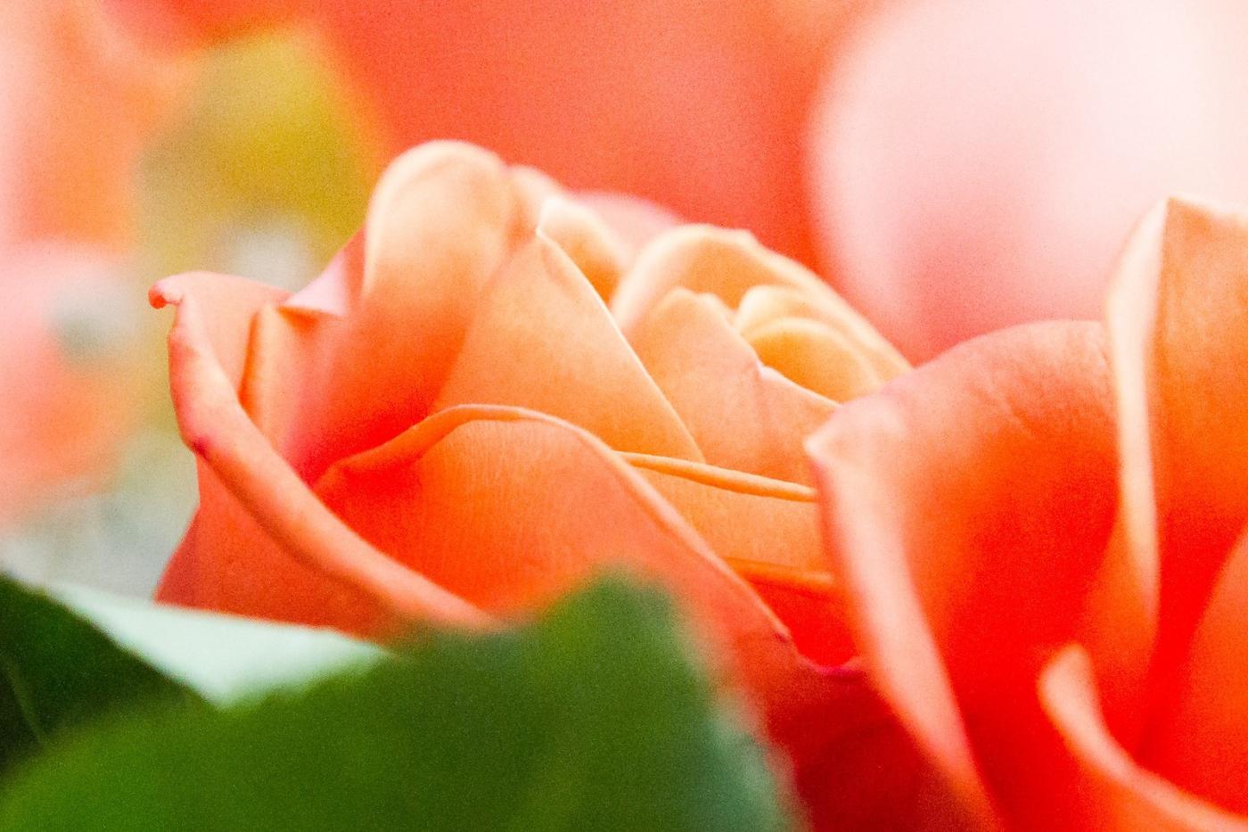 情人节你送花了吗?_图1-9