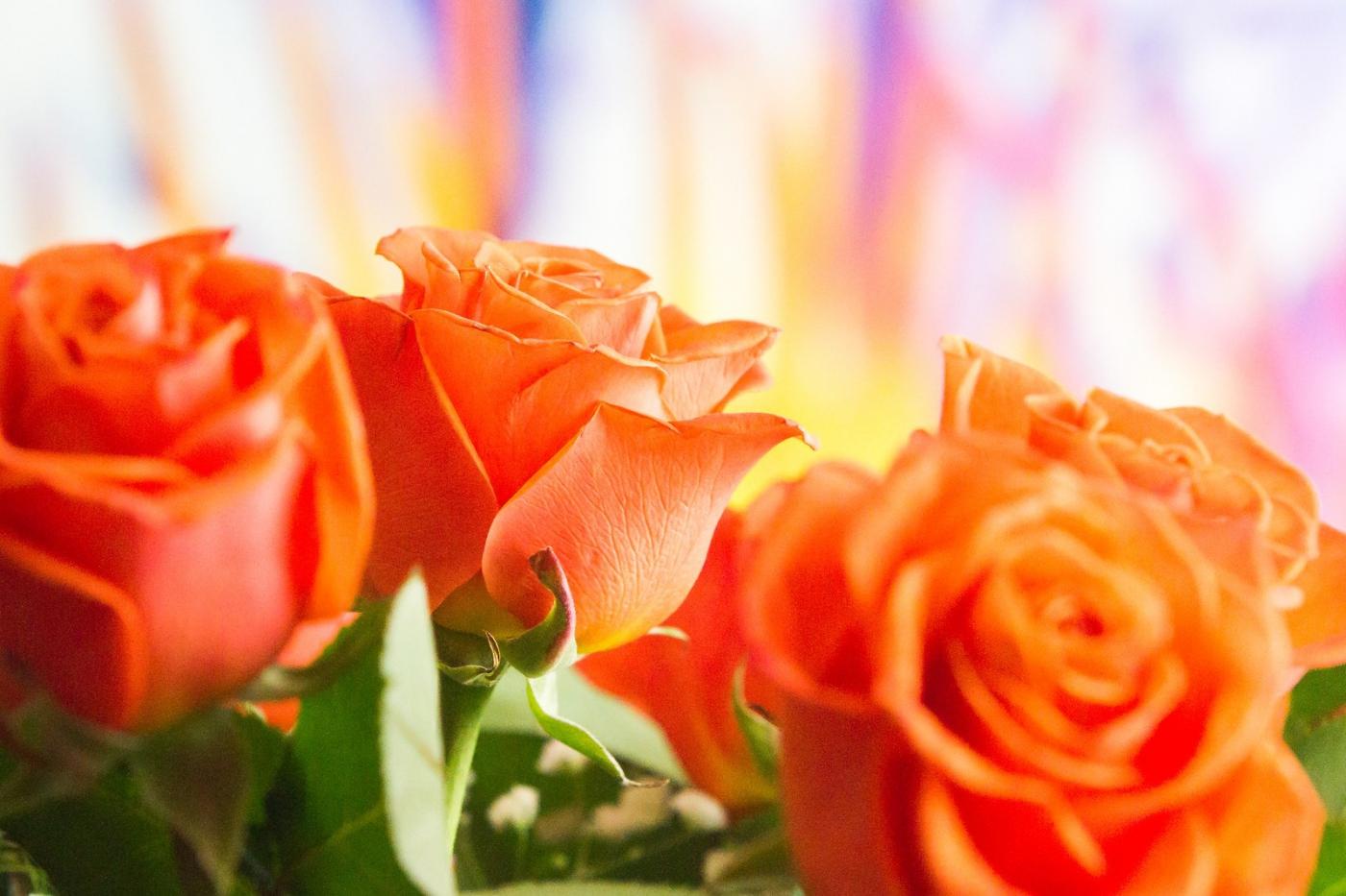 情人节你送花了吗?_图1-10