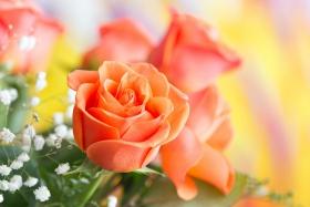 情人节你送花了吗?