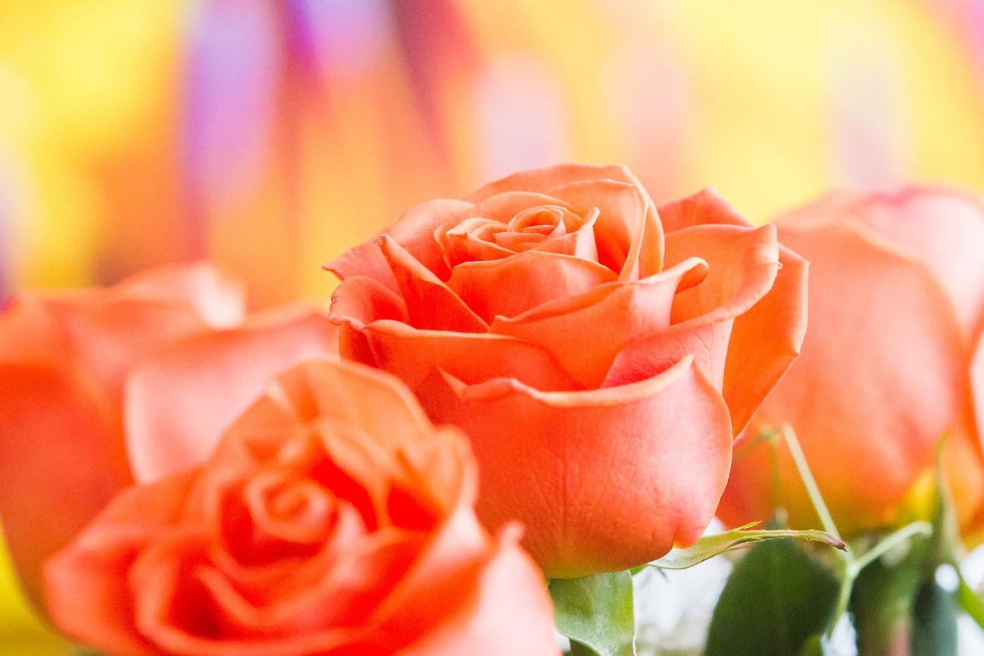 情人节你送花了吗?_图1-2
