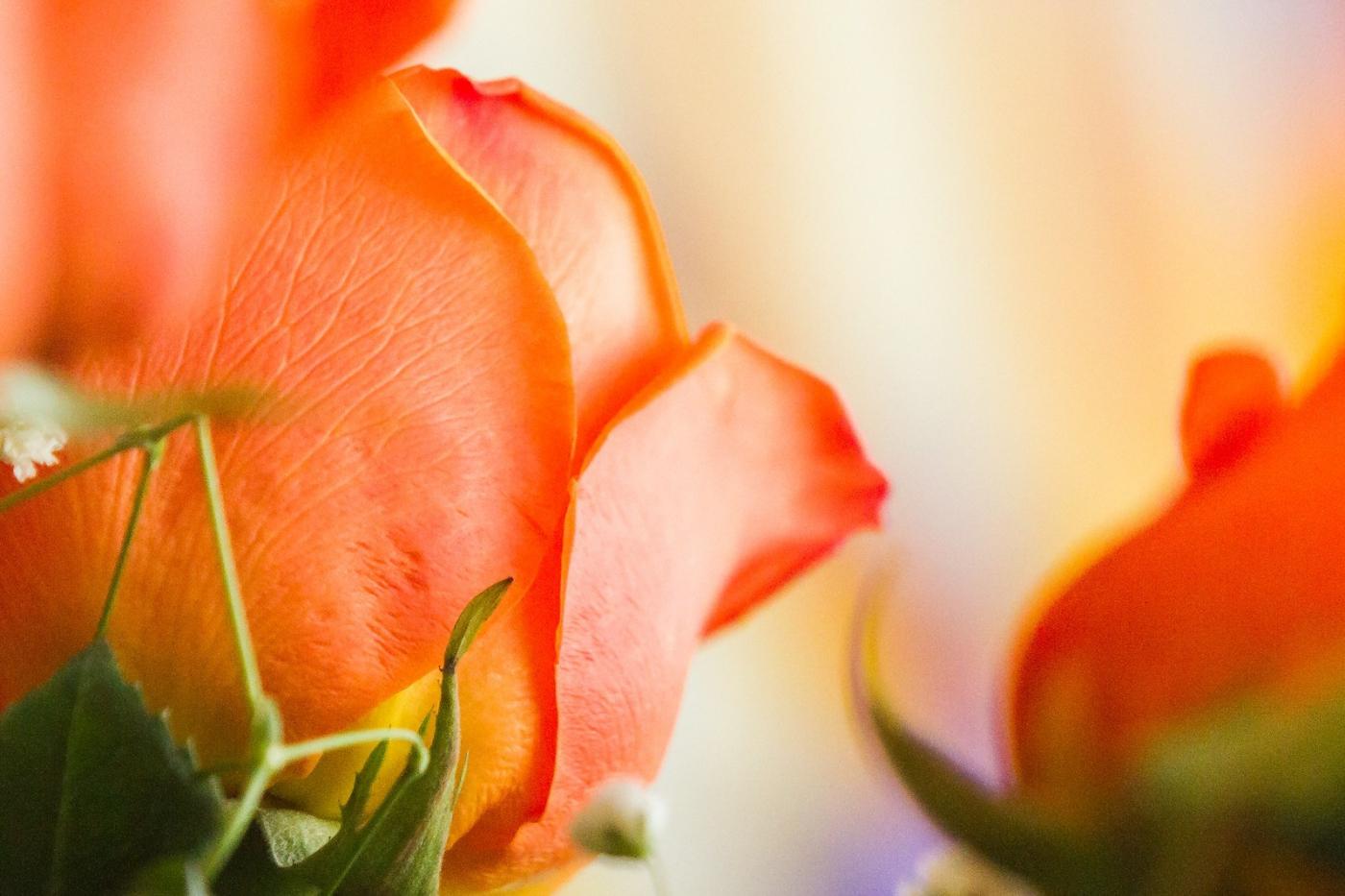 情人节你送花了吗?_图1-3