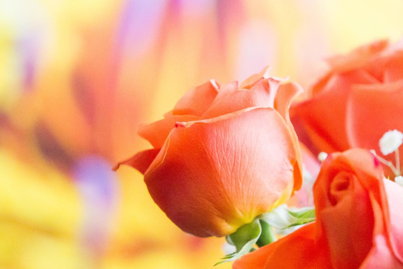 情人节你送花了吗?_图1-4