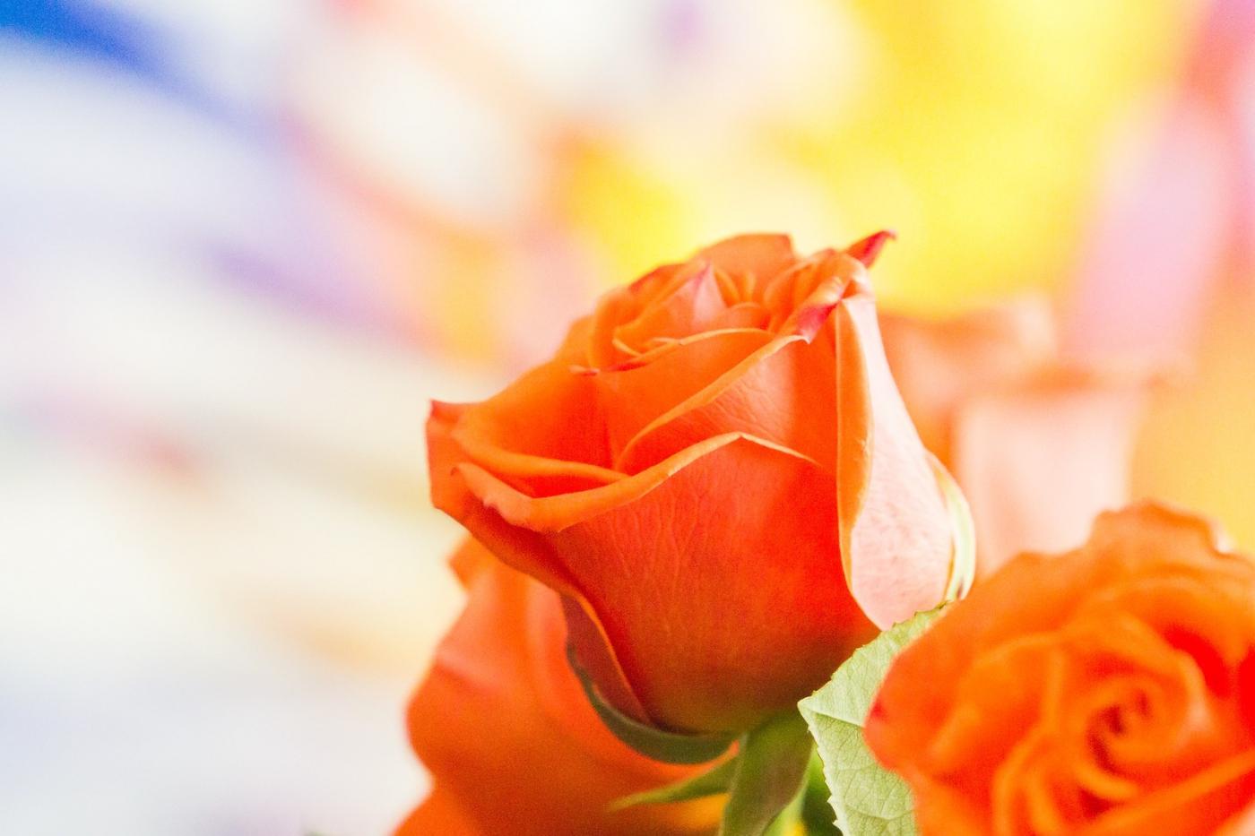 情人节你送花了吗?_图1-5