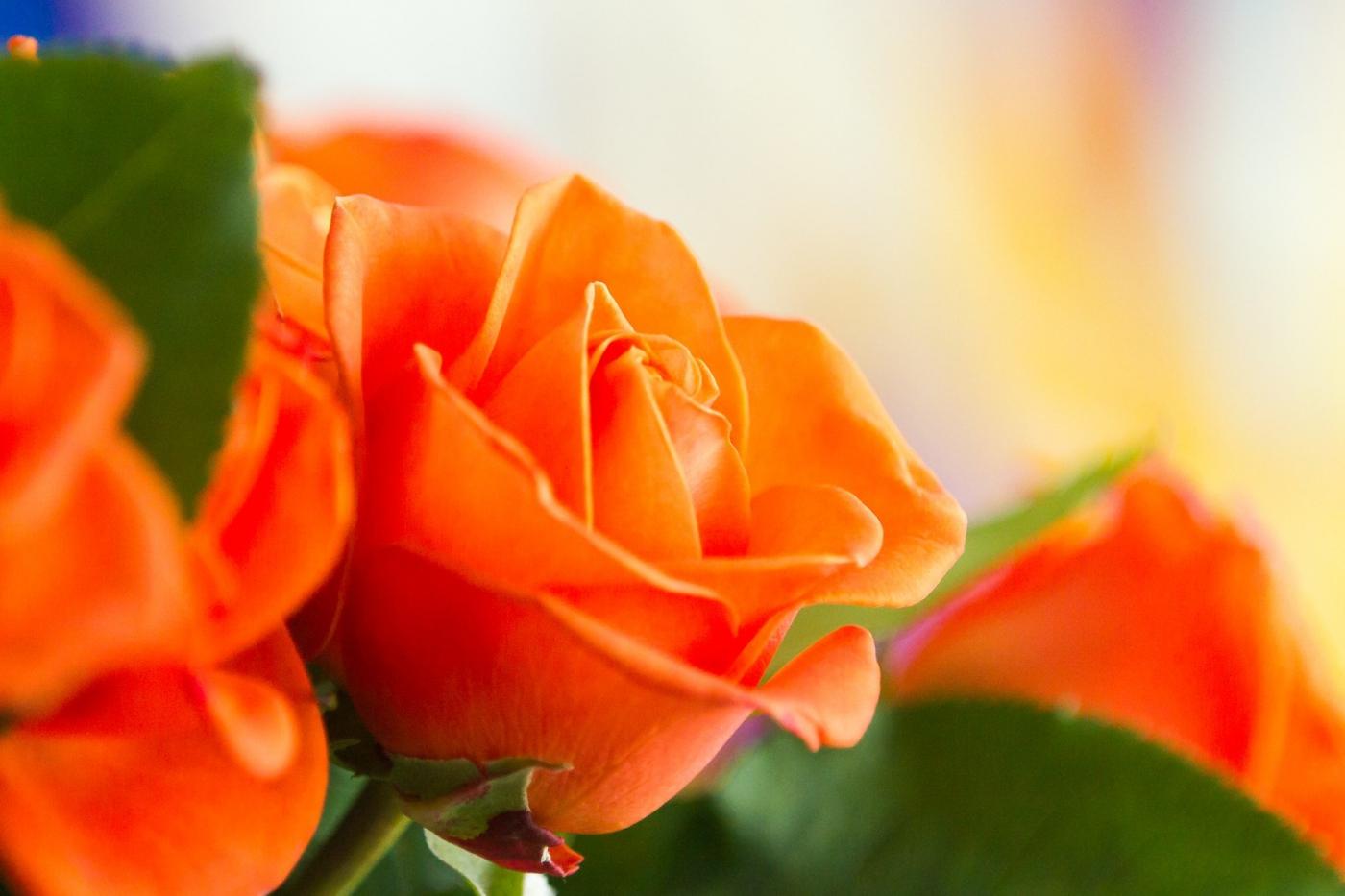 情人节你送花了吗?_图1-6