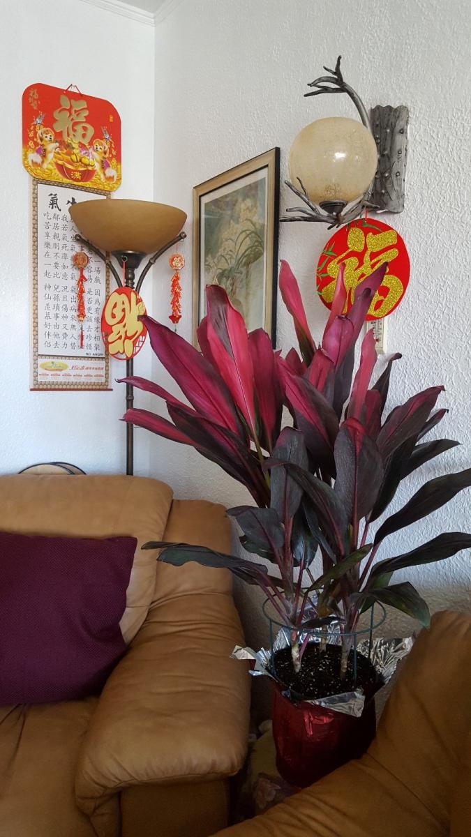 [田螺随拍]过年家居的装饰也是对父母亲的一种传承_图1-10