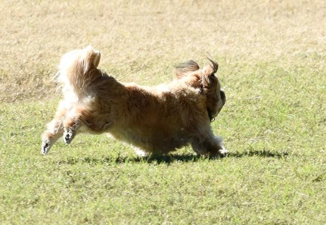 狗年吉祥_图1-4