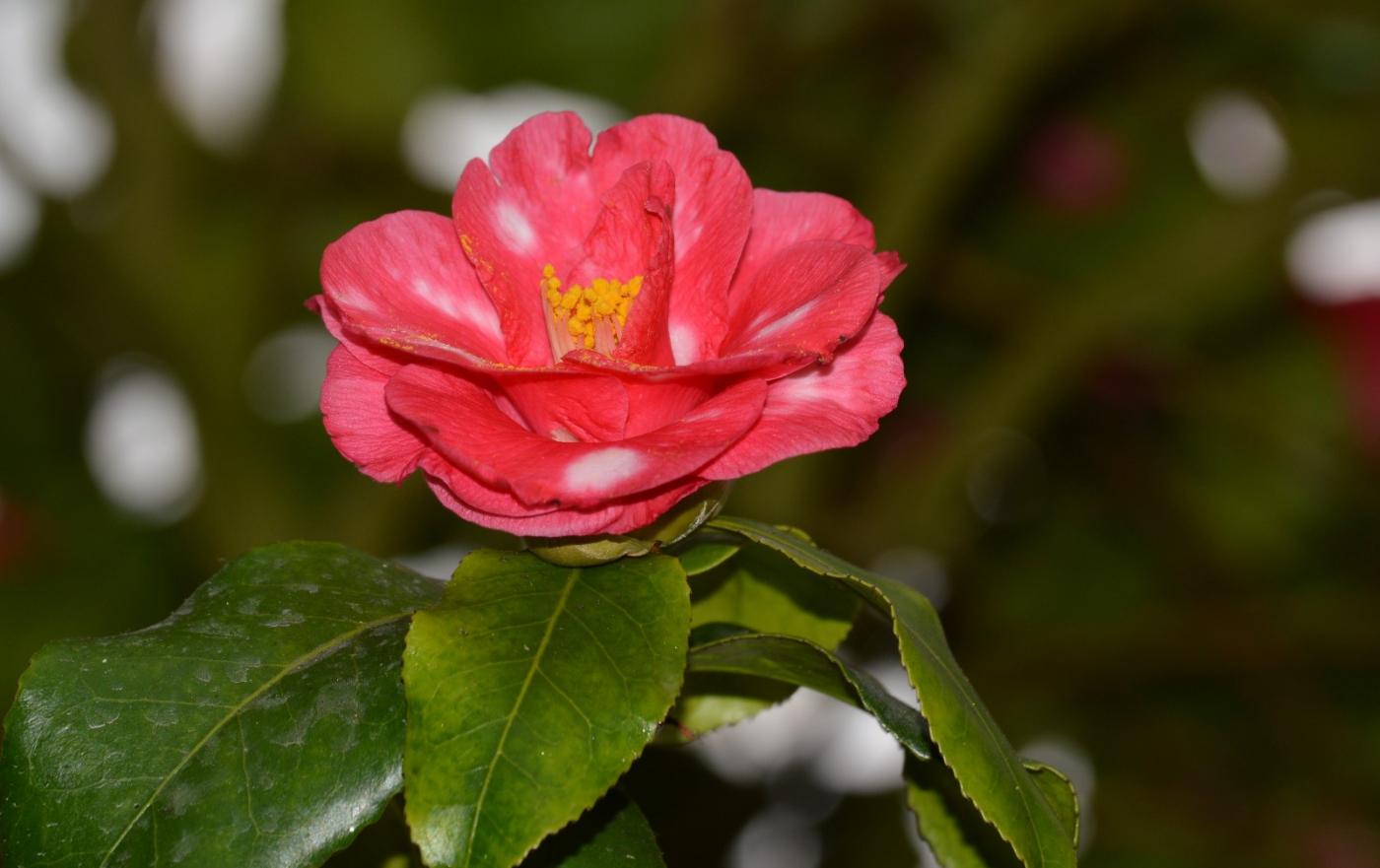 红花朵朵贺新年_图1-2