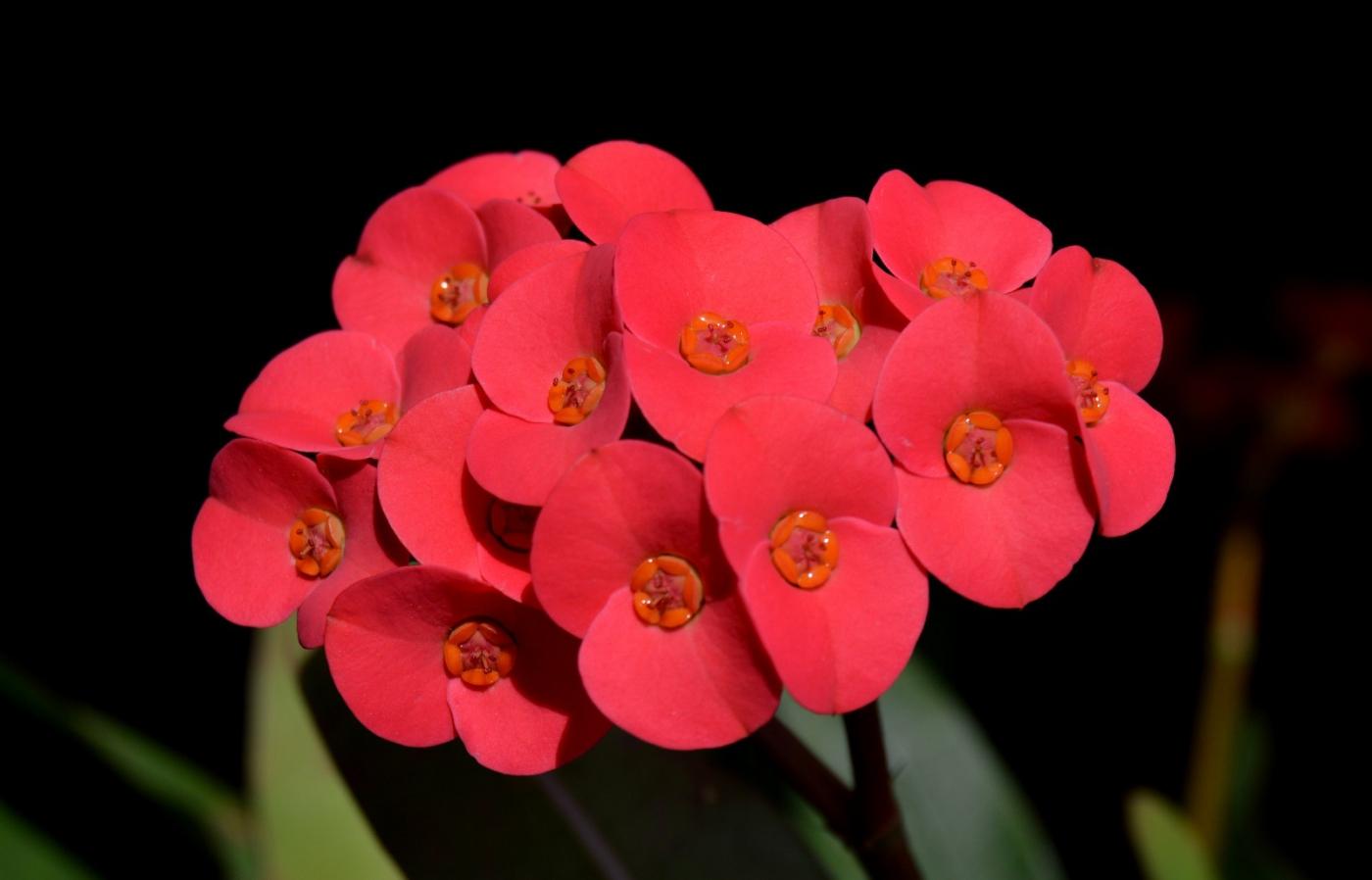 红花朵朵贺新年_图1-3