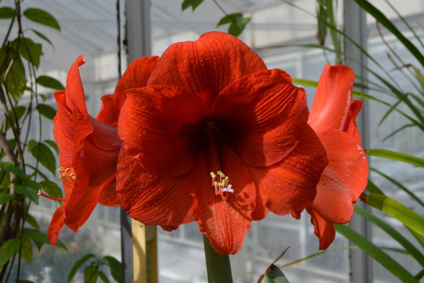 红花朵朵贺新年_图1-4