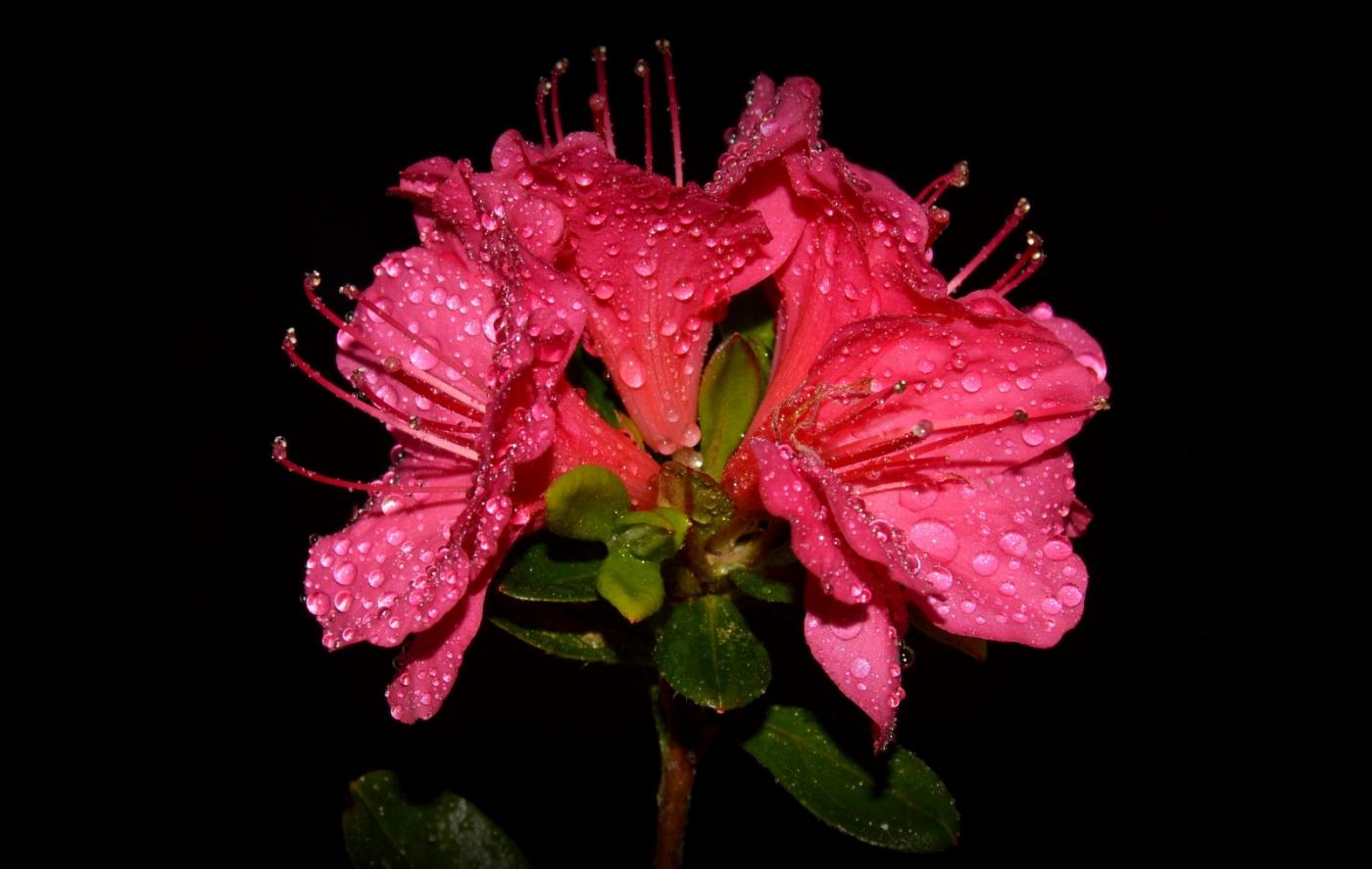红花朵朵贺新年_图1-5