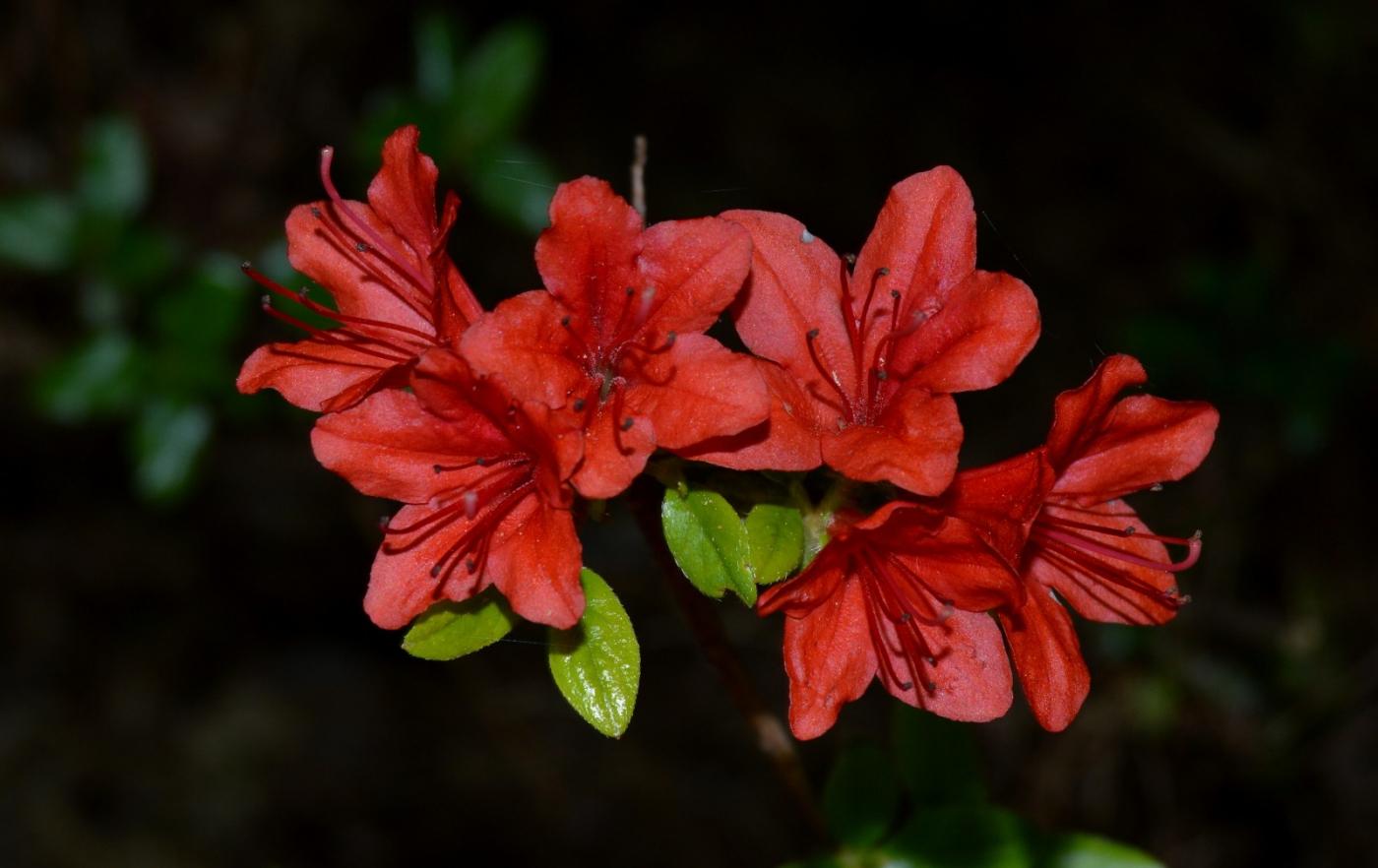 红花朵朵贺新年_图1-6