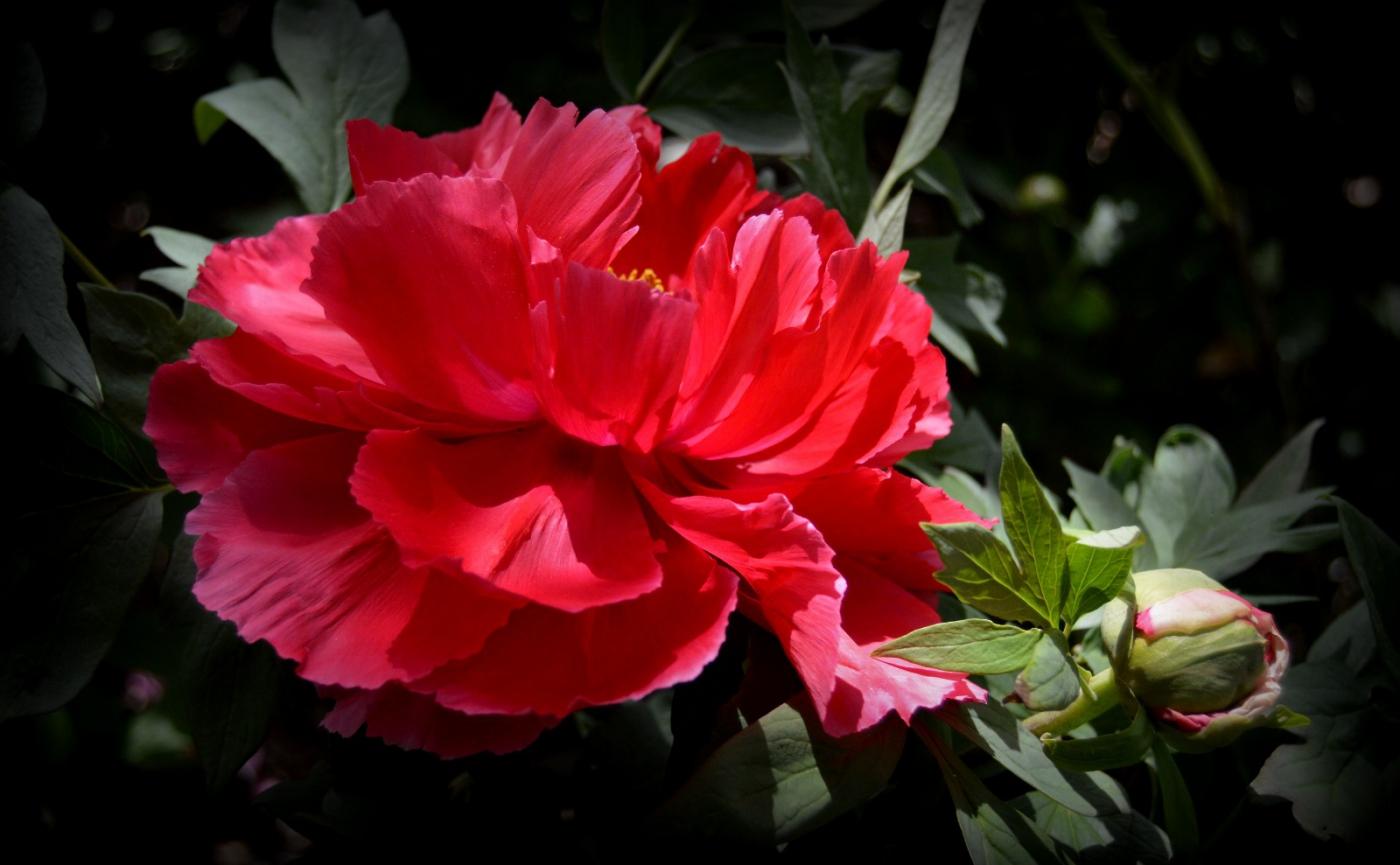 红花朵朵贺新年_图1-7