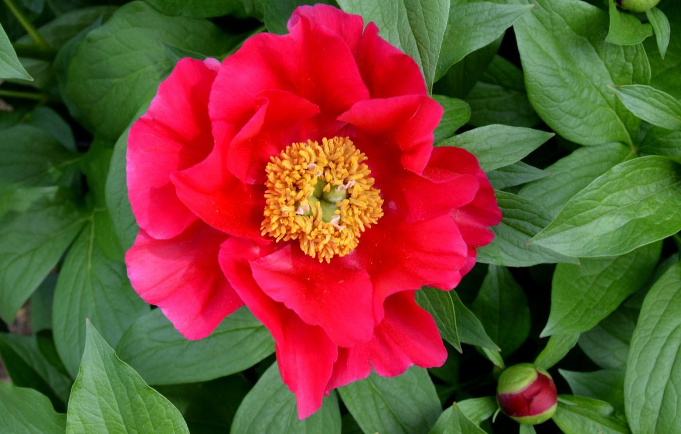 红花朵朵贺新年_图1-9
