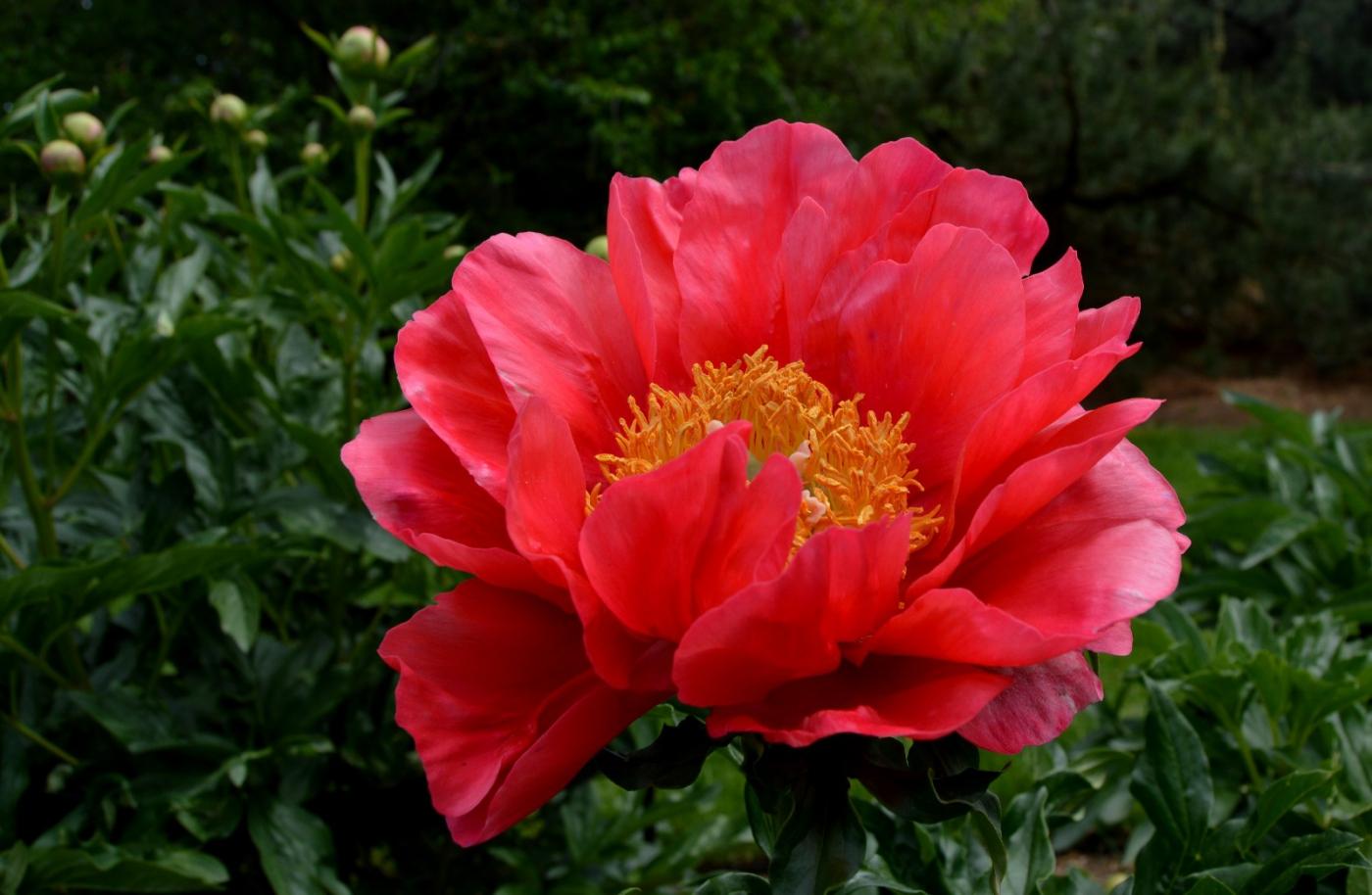 红花朵朵贺新年_图1-10
