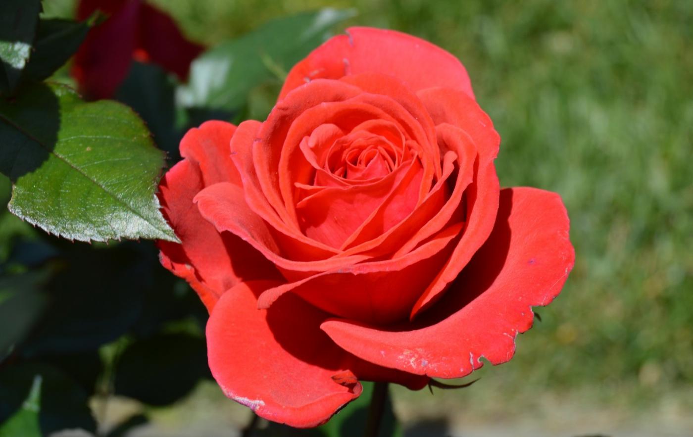 红花朵朵贺新年_图1-11