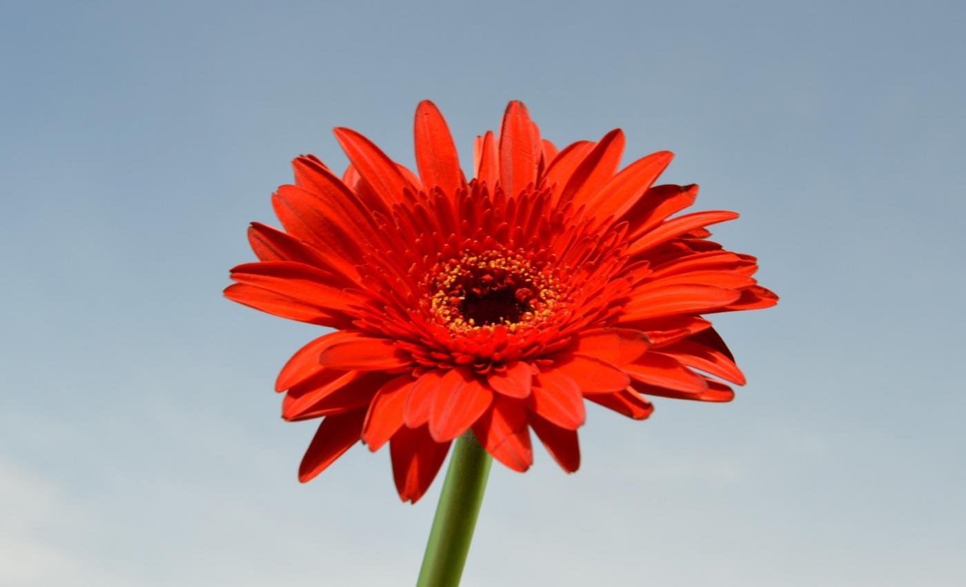 红花朵朵贺新年_图1-13