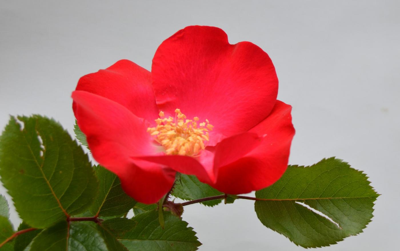 红花朵朵贺新年_图1-14