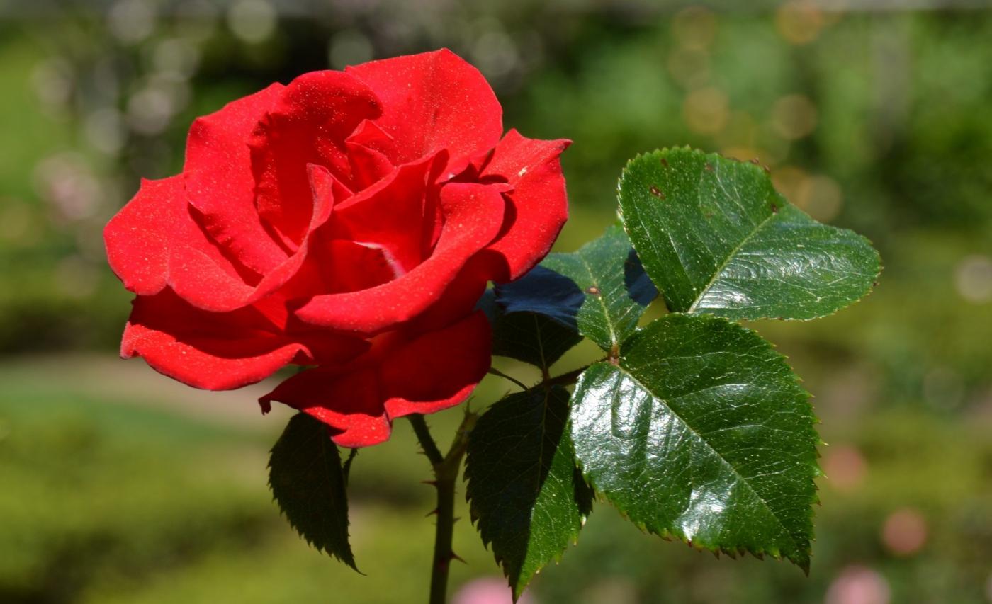 红花朵朵贺新年_图1-15