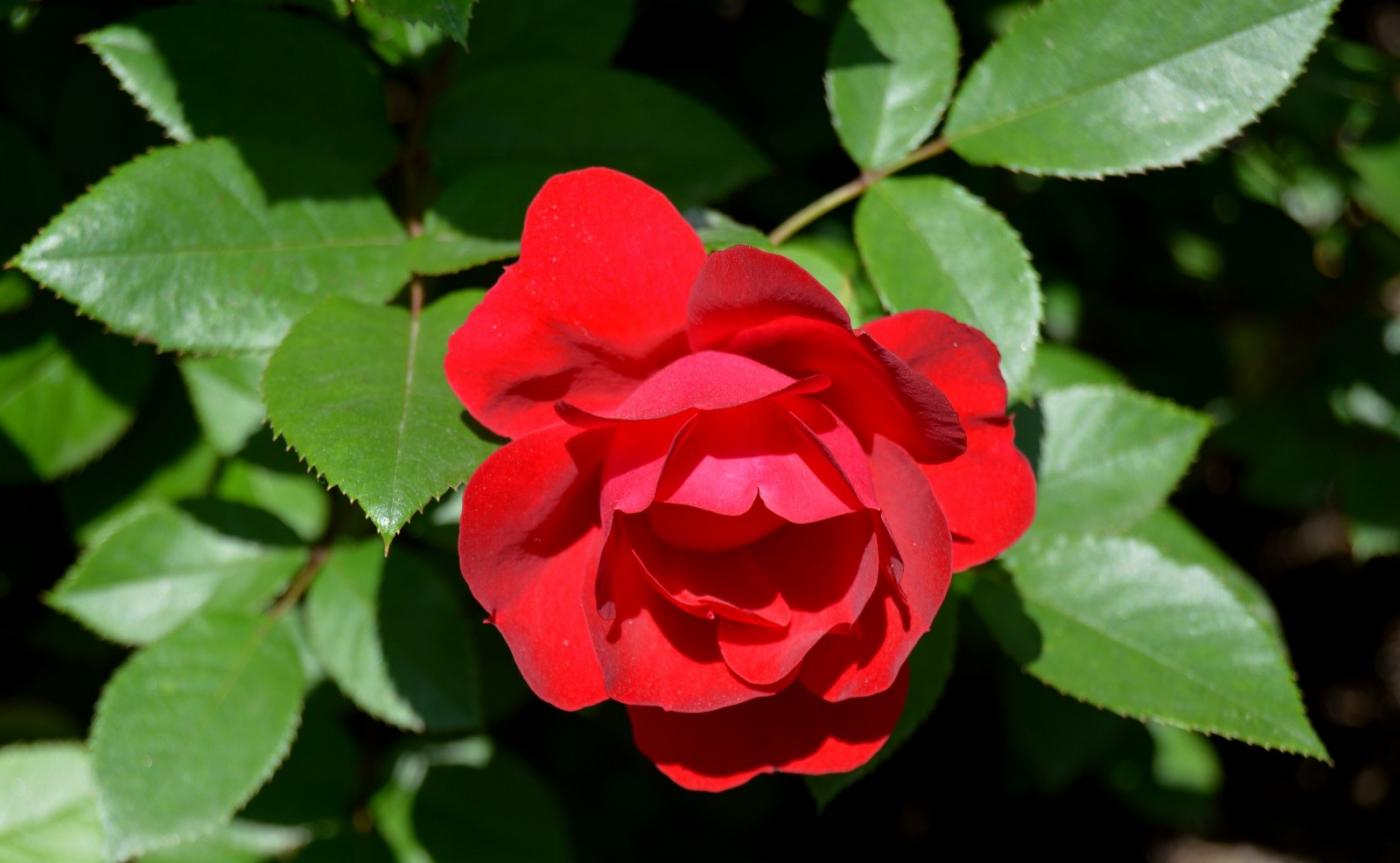 红花朵朵贺新年_图1-16