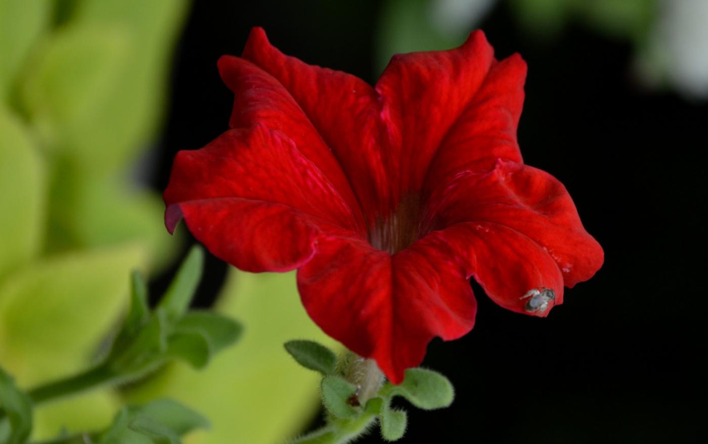 红花朵朵贺新年_图1-18