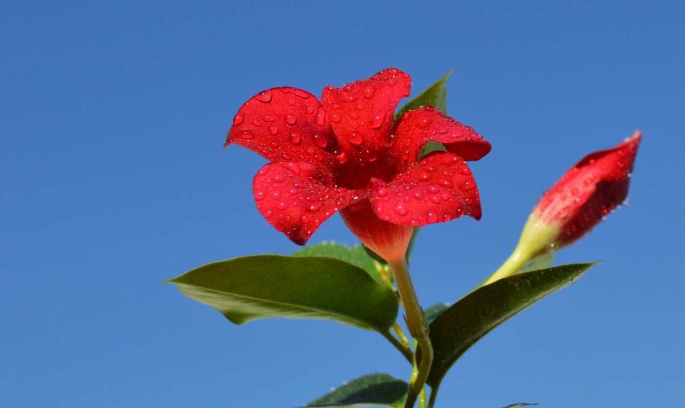 红花朵朵贺新年_图1-20