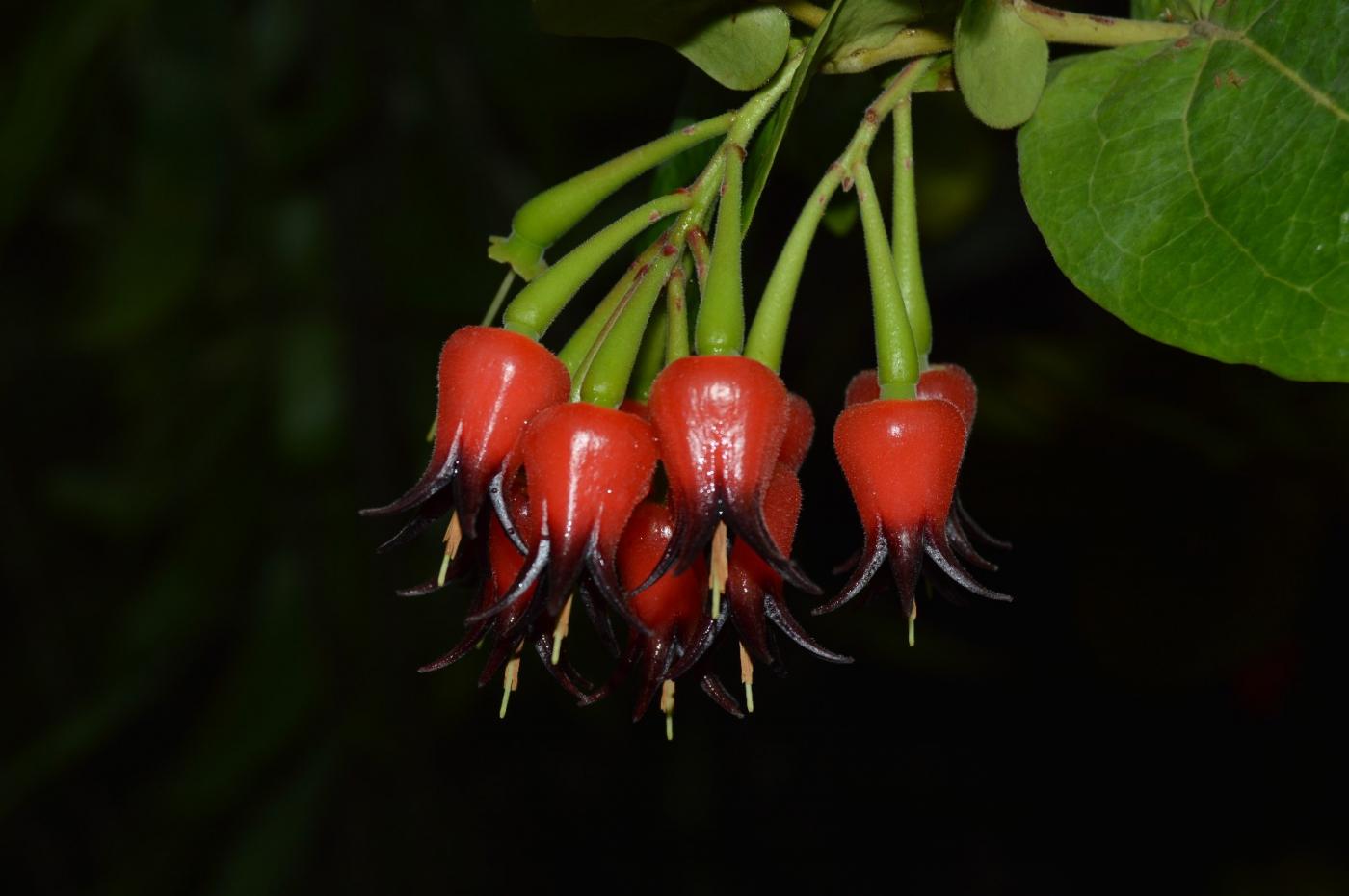 红花朵朵贺新年_图1-26