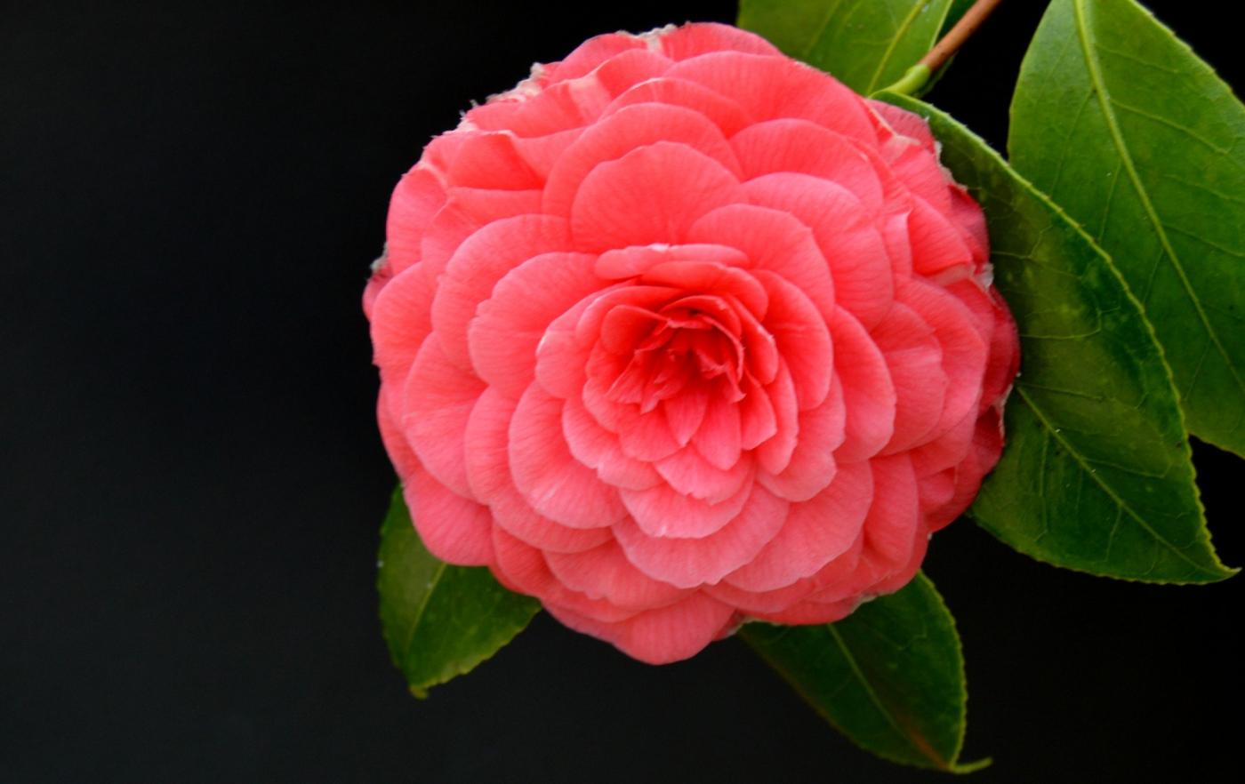 红花朵朵贺新年_图1-29