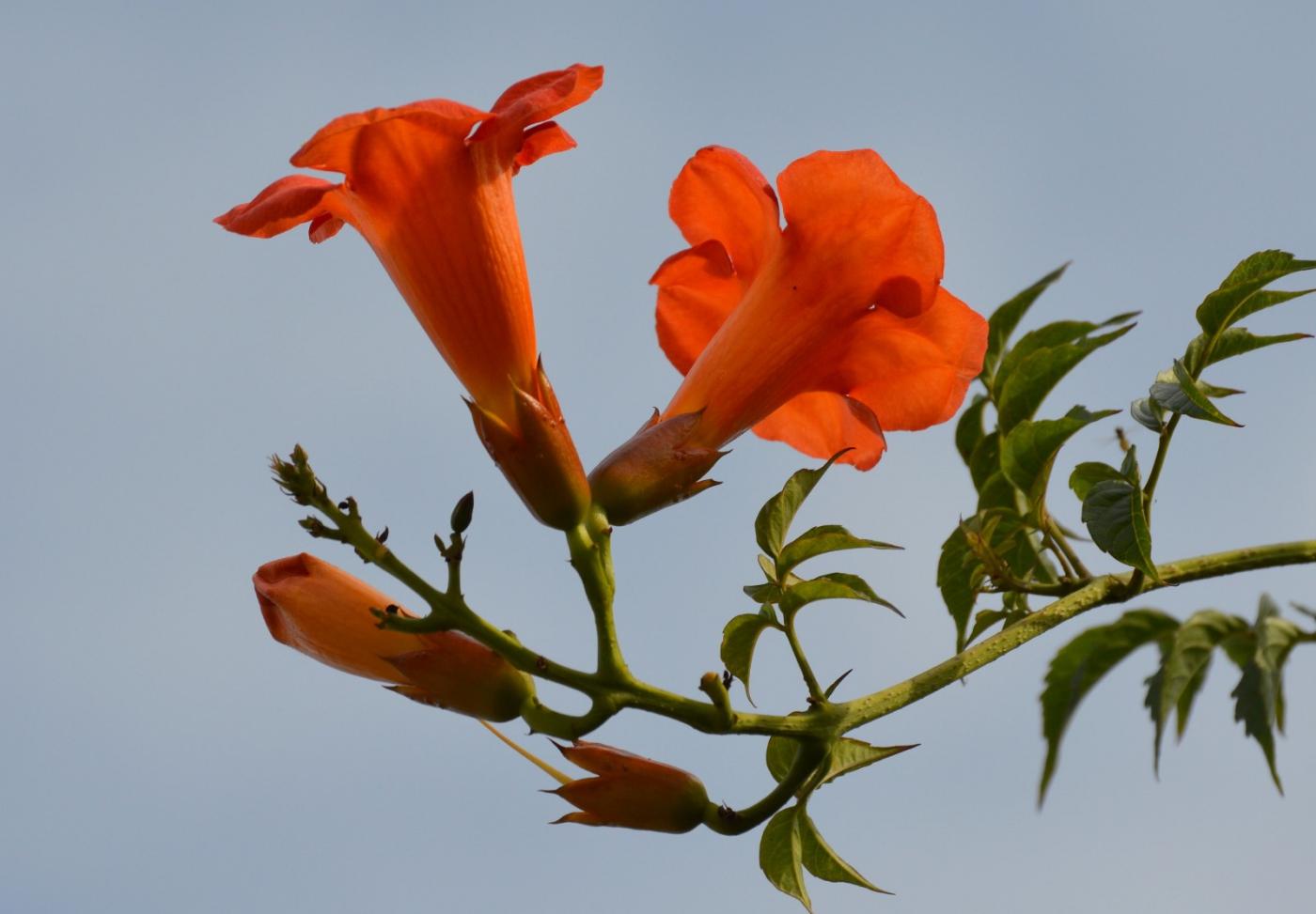 红花朵朵贺新年_图1-30