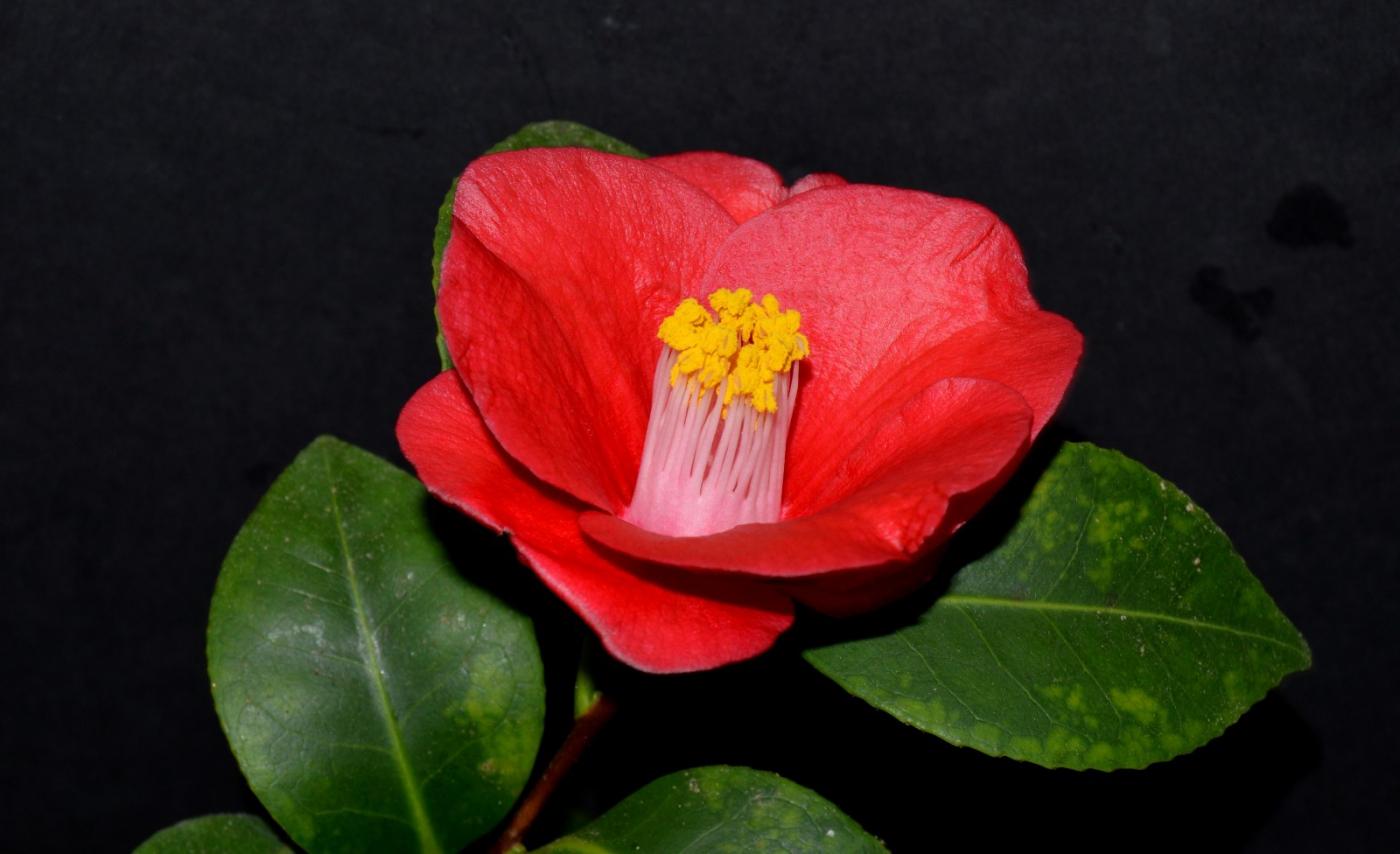 红花朵朵贺新年_图1-33