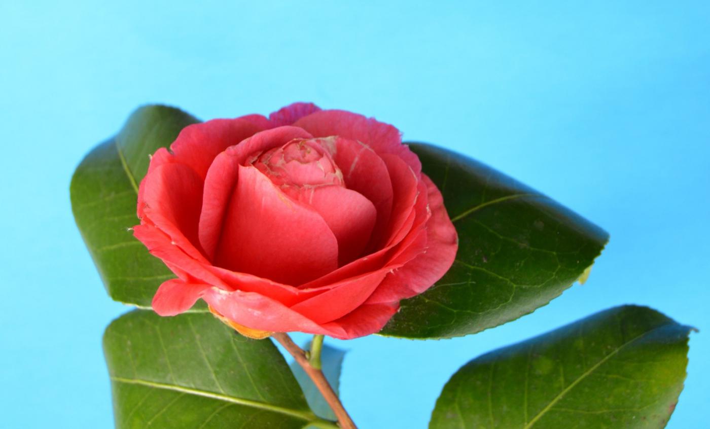 红花朵朵贺新年_图1-34