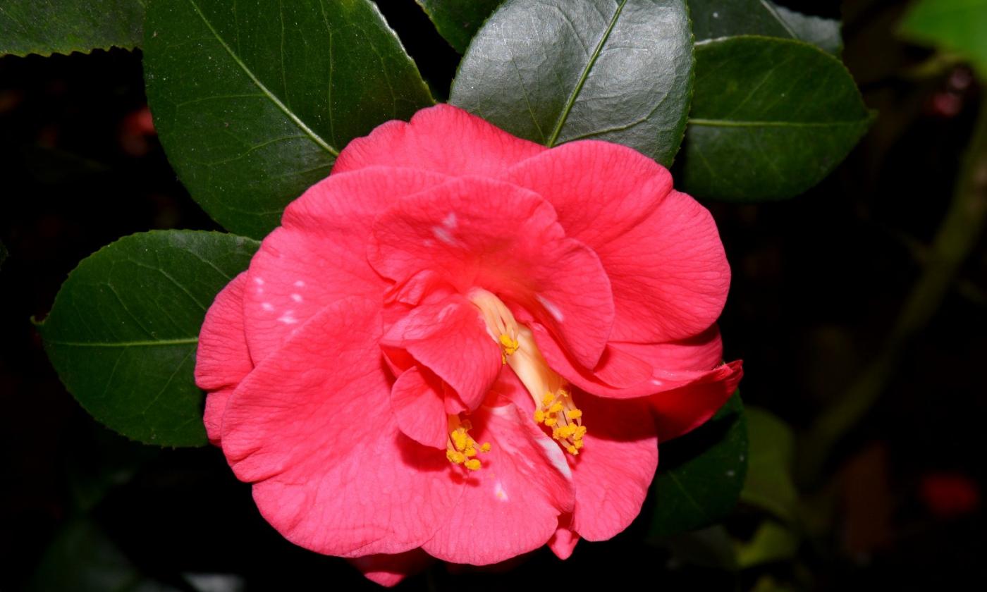 红花朵朵贺新年_图1-36
