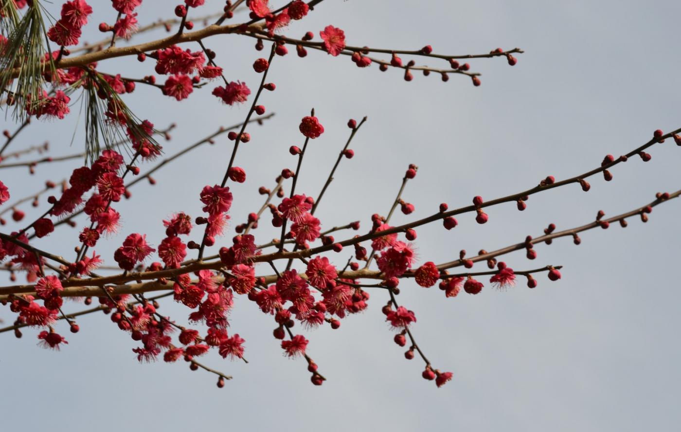 红花朵朵贺新年_图1-38