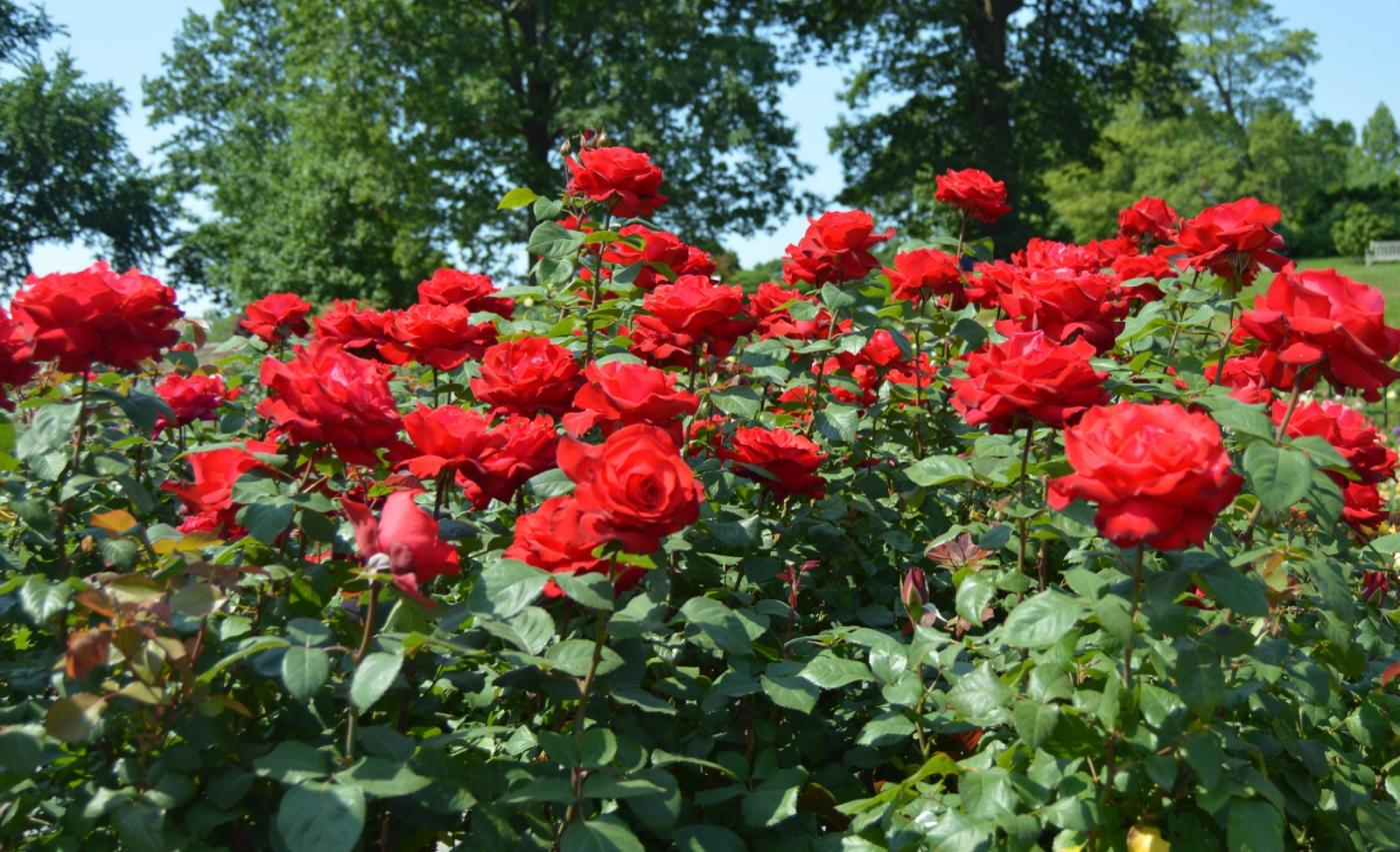 红花朵朵贺新年_图1-39