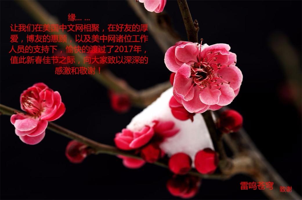 【梅香迎新芳】_图1-1