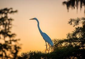 路易斯安那州一处自然保护区
