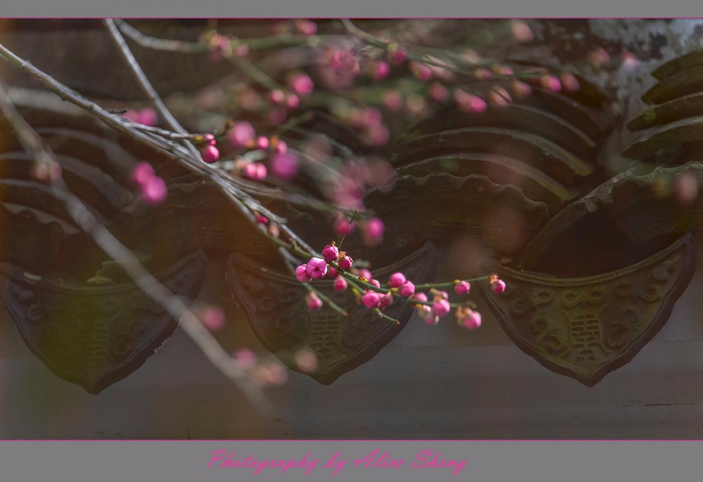 迎春花以盛开,春天快来临了_图1-2